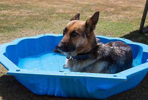 keep dog cool during summer